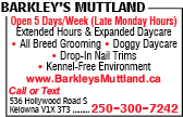 Barkley's Muttland