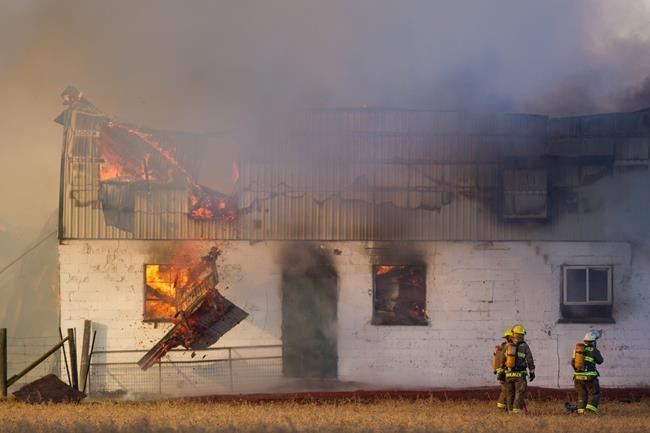 90 cows killed in Ontario barn fire; latest in string of ...