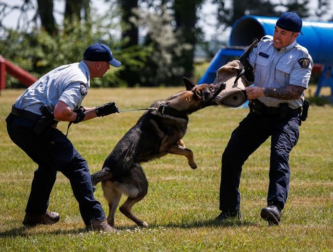 Dog Training Kamloops