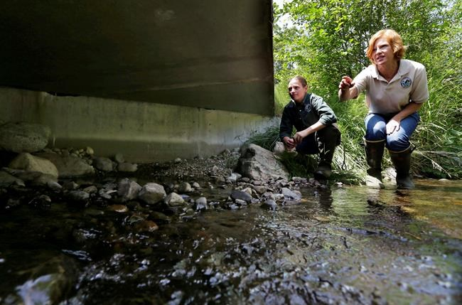 Appeals court washington must fix salmon blocking for Julie s fish creek