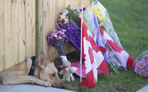 A dog peeks out from under a gate at the Cirillo family home in Hamilton, Ontario near flowers and flags that have been left on Thursday, Oct. 23, 2014. Cpl. Nathan Cirillo, 24, a reservist with Argyll and Sutherland Highlanders of Canada, based in Hamilton, was shot dead in Ottawa Wednesday during an attack by an armed gunman at Parliament Hill.