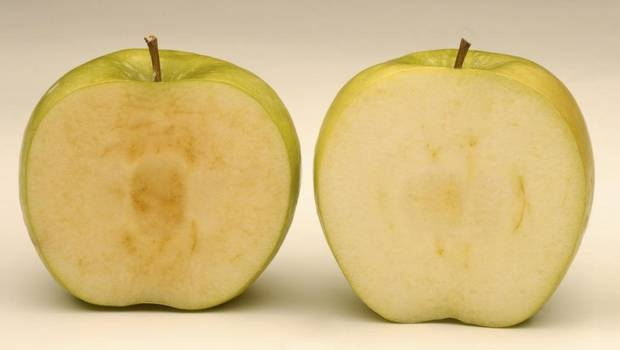 A genetically modified arctic granny apple, right, doesn't brown like a conventional granny apple, left. The United States on Friday, Feb. 13, 2015, approved the commercial planting of genetically engineered apples that are resistant to turning brown when sliced or bruised.