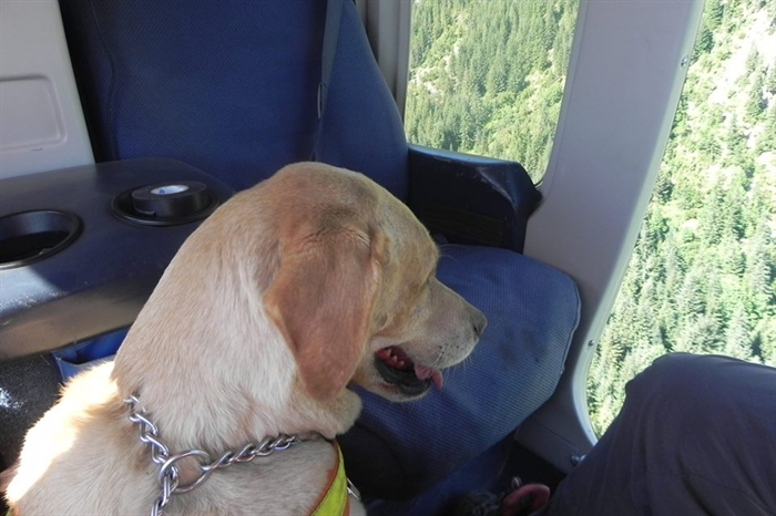Search and rescue crews, including dog teams and an RCMP helicopter team, took part in a cold case search May 31.