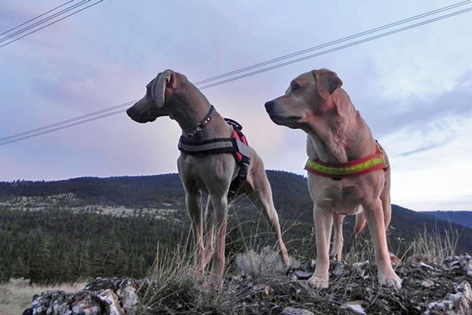 Vida and Juno are the only two validated search and rescue dogs currently working in the Southern Interior.