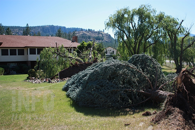 Ruth and Kurt Klaes lost seven trees on their property as a result of Monday's storm.