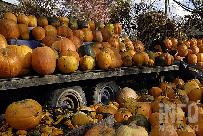 Don-O-Ray Vegetables still has pumpkins available at their Benvoulin location.