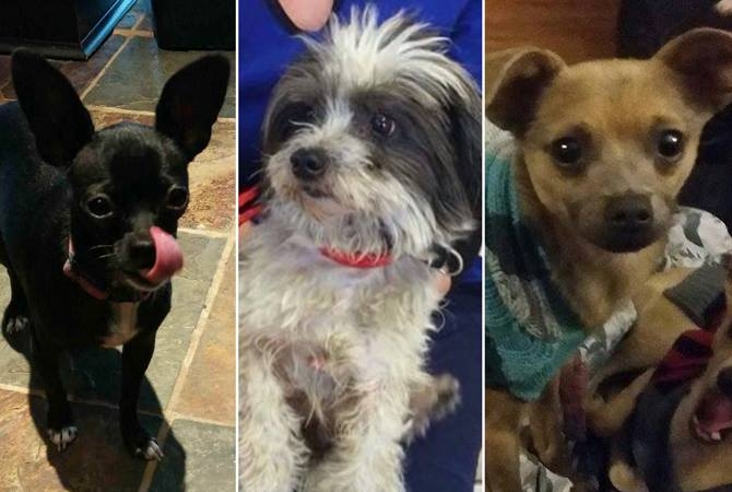 Dogs posted for adoption through Saving Grace.