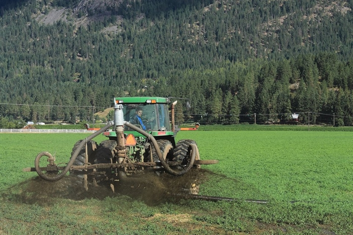 Manure is spread on the 210 acre field owned by HS Jansen and Sons Farm Ltd. in Vernon.This practice sparked controversy among Spallumcheen residents after they were put on a water advisory in 2014.