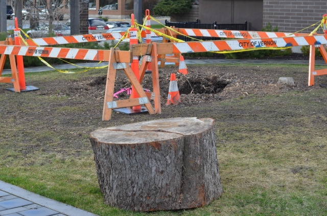 The tree was chopped down in November 2015 and fully removed in mid-March 2016.