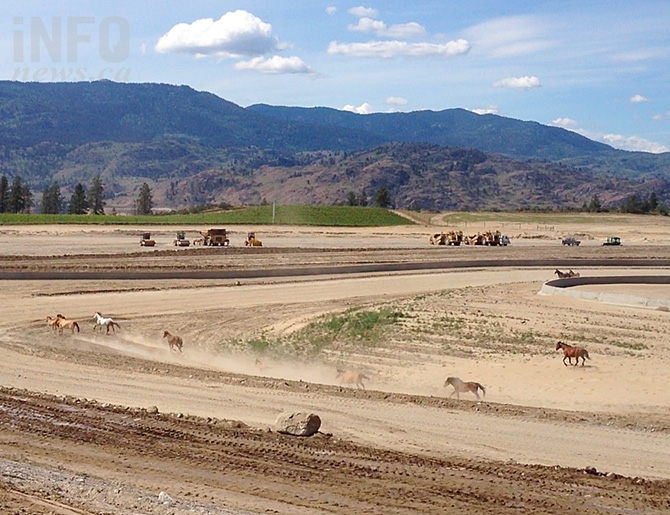 Wild horses enjoy a run through the Area 27 property during construction. Once built the fences will go up and the only horsepower people will see at the track are the mechanical kind, under the hoods of members' race cars.