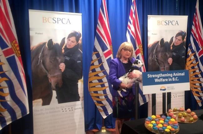 Liberal MLA Jane Thornthwaite, holding Burger, a Jack Russell terrier puppy, speaks at the announcement of B.C.'s plans to strengthen its animal welfare law, at the provincial legislature in Victoria on Monday, February 27, 2017.