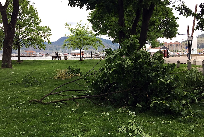 Branches in City Park in Kelowna were knocked down during the wind storm last night.