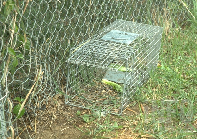 Several of these marmot traps can be found at McArthur Island and Riverside Park