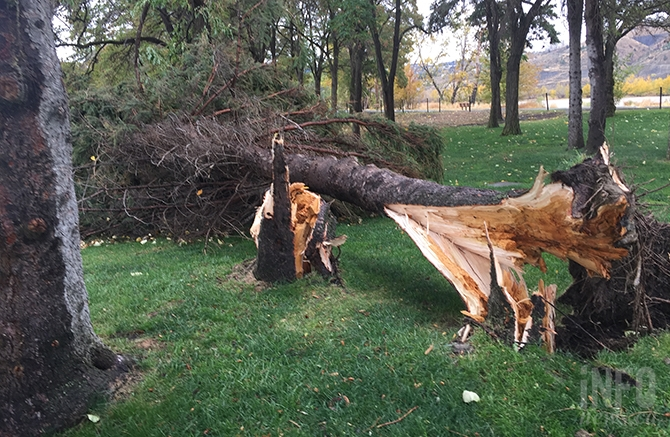 The wind snapped tree trunks in McArthur Island Park, Tuesday, Oct. 17, 2017.