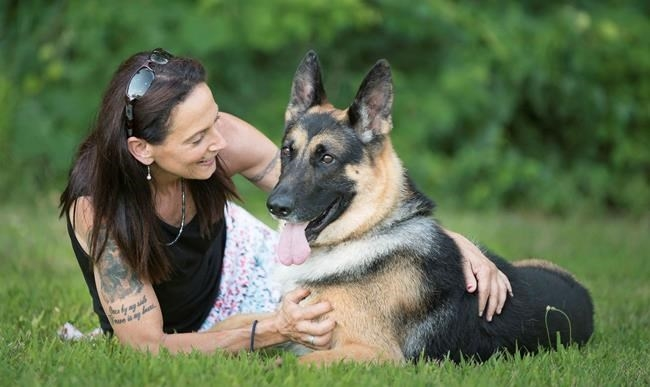 In this 2017 image provided by Sue Condreras, Fanucci, a German shepherd, poses with handler Sue Condreras last summer in upstate New York. Fanucci's right rear leg was shattered in a van accident in 2014, leaving his show career in doubt.