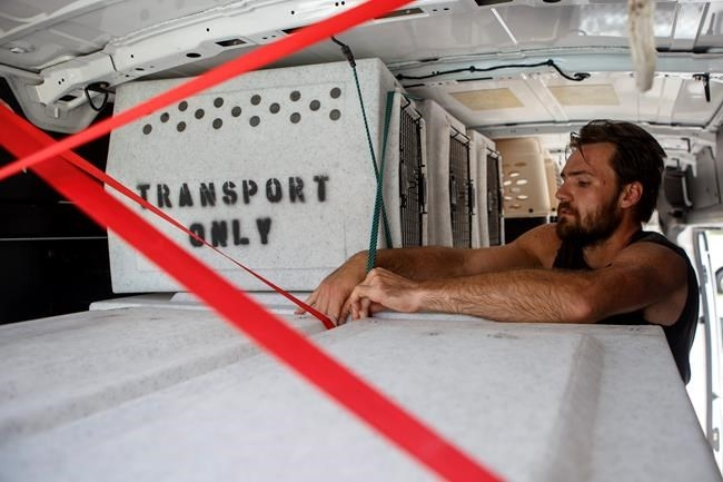 Evan Shepard, the lead canine behavior assessor for McKamey, works on securing kennels in a transport van at McKamey Animal Center on Wednesday, Sept. 12, 2018 in Chattanooga, Tenn. Shepard will travel with a volunteer to South Carolina to help free up shelter spaces for local animals as Hurricane Florence approaches the area.