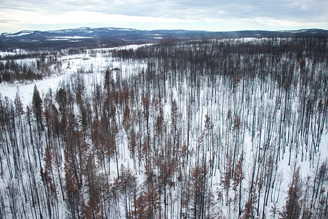 Bare trees that had been burned in the 2017 wildfires could be seen through the helicopter's window.