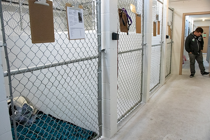 The dog kennels are quiet except for gentle spa music filling the white concrete halls on Feb. 15, 2019. Sean Hogan, the Kelowna SPCA branch manager, says with the staff they have he likes to keep no more than eight dogs at a time so that they can provide each animal with adequate care.
