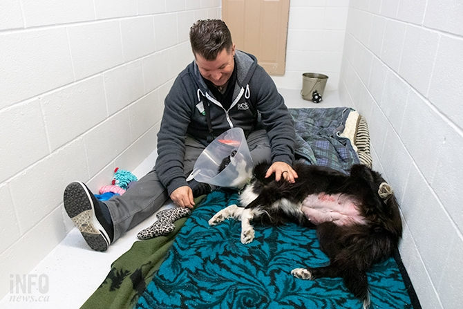 Sean Hogan gives belly rubs to Jessie, the female Border Collie who was recently spayed. Jessie was Global TV's 'Pet of the Week' on Feb. 25, 2019. She was adopted within 24 hours. The red patches of skin are razor burn from when her fur was shaved, and the cone on her head is to stop her from licking the incision.