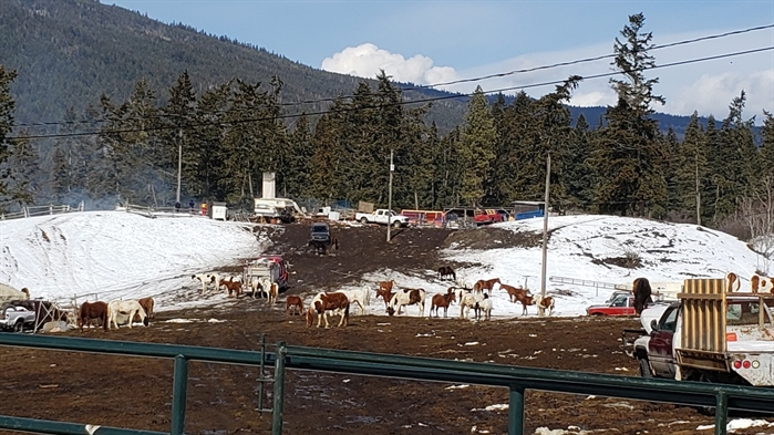 The Irish Creek Road property, March 15 2019.