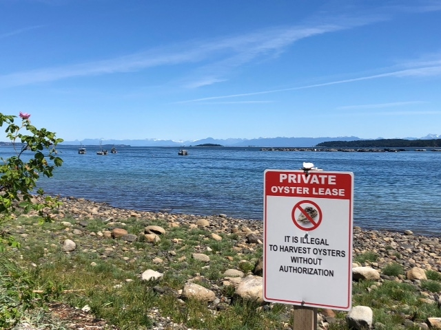 "This sign warns poachers that only Oyster ""farmers"" who own leases on Baynes Sound on Vancouver Island can harvest bi-valves."