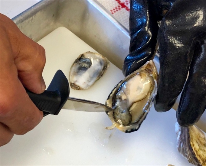 A Sun Seeker oyster at the Fanny Bay Oysters plant on Vancouver Island. Raw oysters should be consumed as close to live as possible and no more than 10 minutes after shucking.