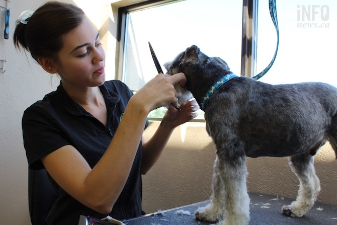 Robinson is seen trimming a dog at her dog salon on Tuesday, July 9, 2019.