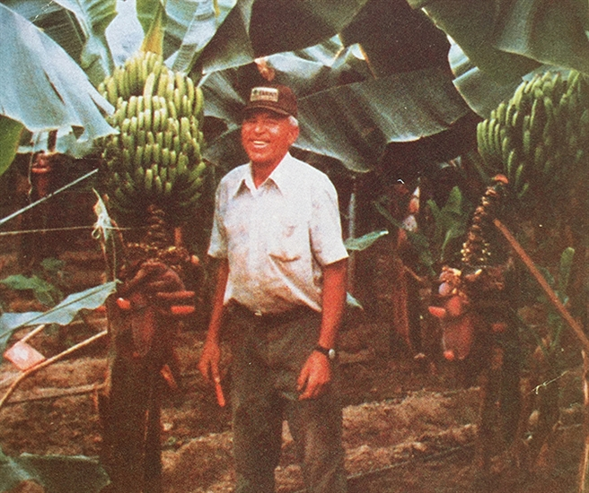 Joe Fernandes stands in his Fernandes Banana Jungle in Osoyoos in this postcard image. The bananas were a tourist attraction for about 10 years between 1985 and 1995.