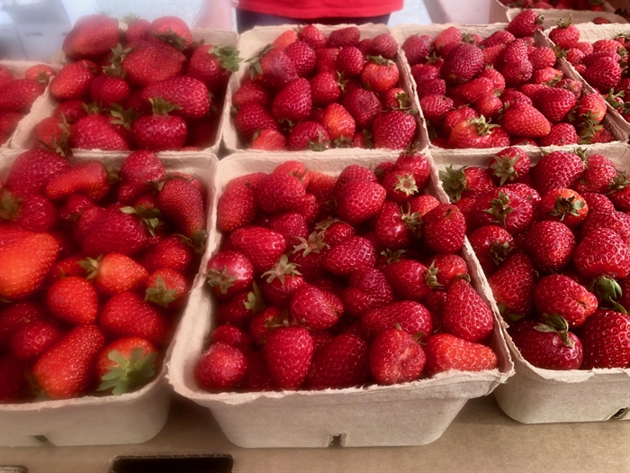 Strawberry season has begun!
