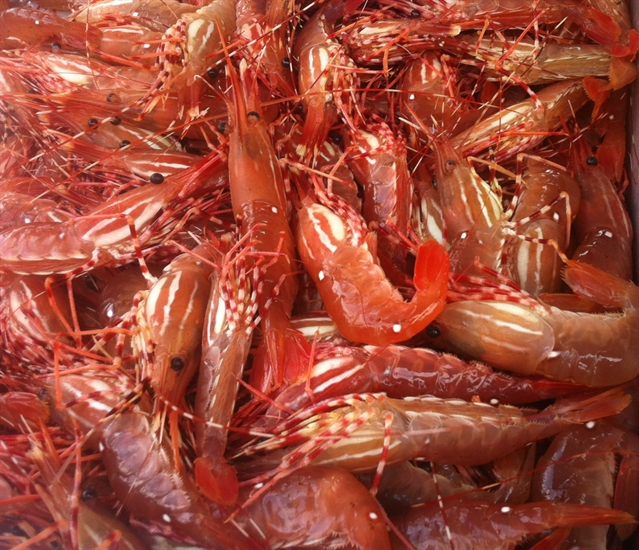 Infowine The Chef Who Made B C Spot Prawns Famous And How You Can Cook Them Infonews