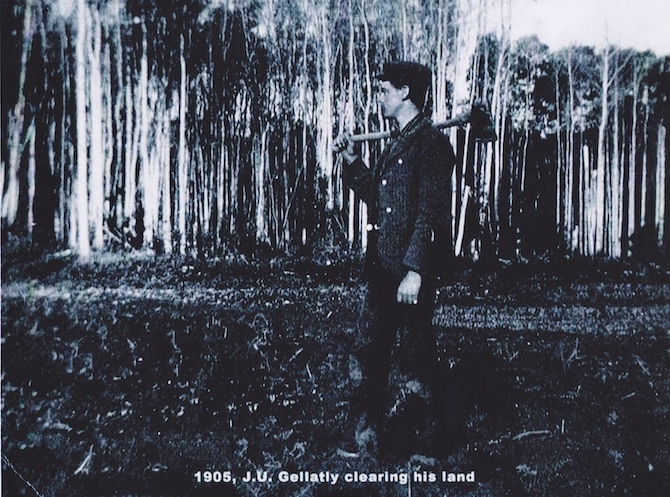 Jack Gellatly clearing his land in 1905 so he could plant nut trees.