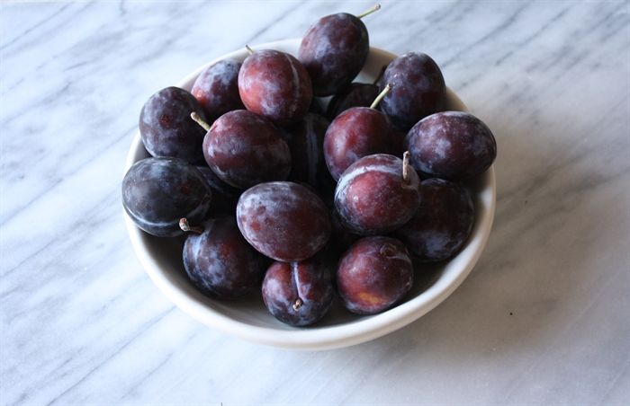 Italian prune plums are in season right now and available at local fruit stands.