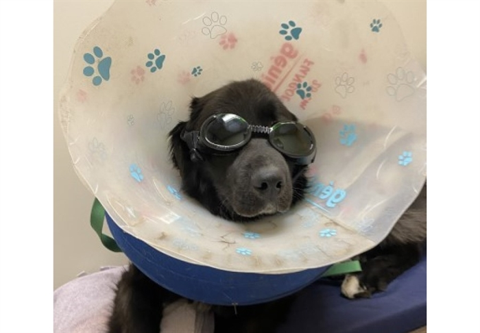 These goggles shielded Theo's eyes during laser therapy that would stimulate cell growth on his wound.