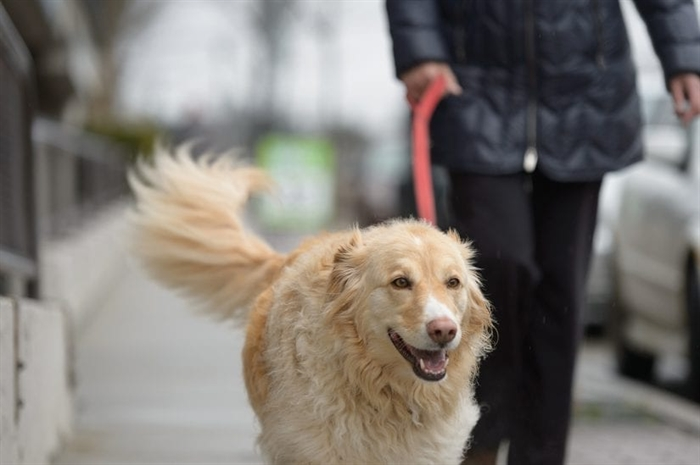 With the warmer weather, people cooped up by the COVID-19 pandemic are getting outside more often and a side effect can be dog getting access to discarded roaches. And according to the BC SPCA, consuming cannabis can be deadly for dogs.