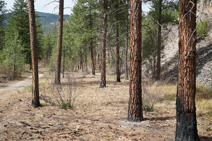 The well-managed section of the GDP forest that suffered a prescribed burn four months earlier