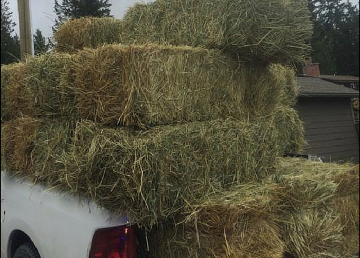 An unsecured load of hay on a truck bed.