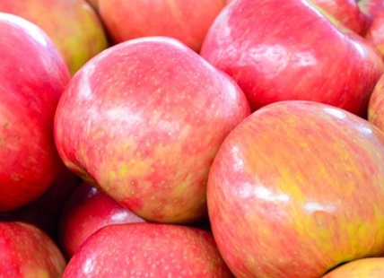 Okanagan apple growers are reeling from low prices and an influx of Washington State apples.