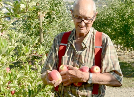 Bob Davison collects apples in the orchard he's farmed for over seven decades.