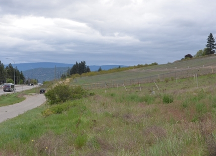 This new vineyard of Boucherie Road in West Kelowna is turning heads as people head on their morning commute.