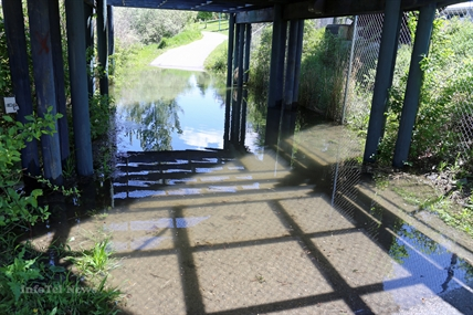 Water under the bridge-the CN underpass along the Rivers Trail in Riverside Park is once again under water.