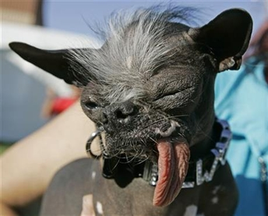 In this Friday, June 22, 2007 file photo, Chinese Crested dog