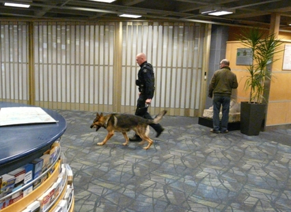 A Kelowna RCMP service dog was used to help search passengers, luggage and the threatened plane at the Kelowna Airport on Saturday, Oct. 25, 2014.