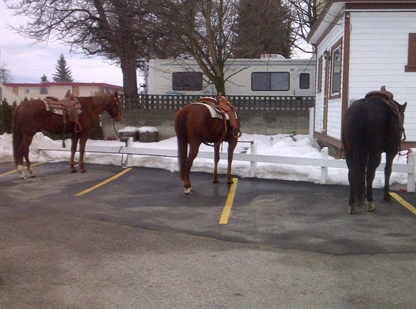 Mayor Howie Cyr says the horses boost business in Enderby.