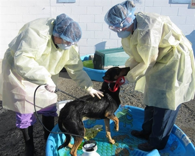 Staff must wear full scrubs and protection to ensure they don't spread the ringworm infection to other animals at the shelter, or the ones at home.