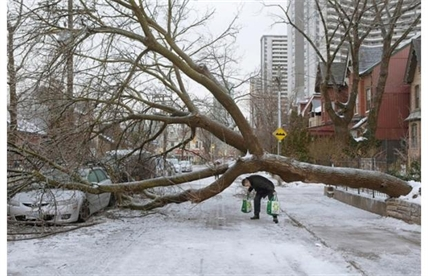 pedestrian walks under a tree blocking Wellesley Street East following an ice storm in Toronto on Monday, Dec. 23, 2013.