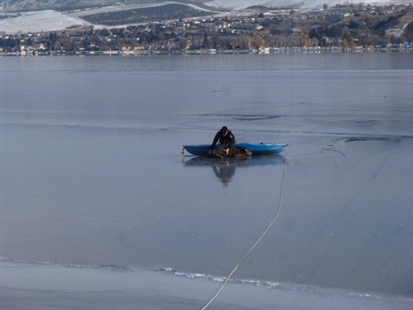 Vernon fire fighters along with Search and Rescue volunteers used a kayak to get to a deer stranded on Okanagan Lake Sunday, Feb. 9, 2014.