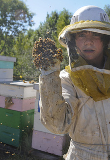 There are already many beekeepers just outside of the city, including Lewis Burkholder from Pritchard.