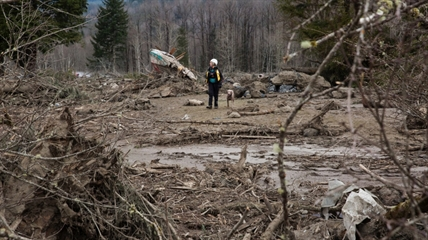 A rescue worker with a search dog works in the debris field near Oso, Wash. on Tuesday, March 25, 2014.