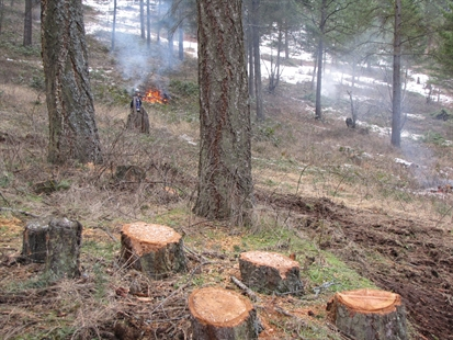 The wildfire fuel modification project underway in Stephens Coyote Ridge Regional Park.