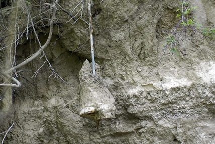 A concrete power pole anchor hangs loose next to Gallatly Road in West Kelowna.